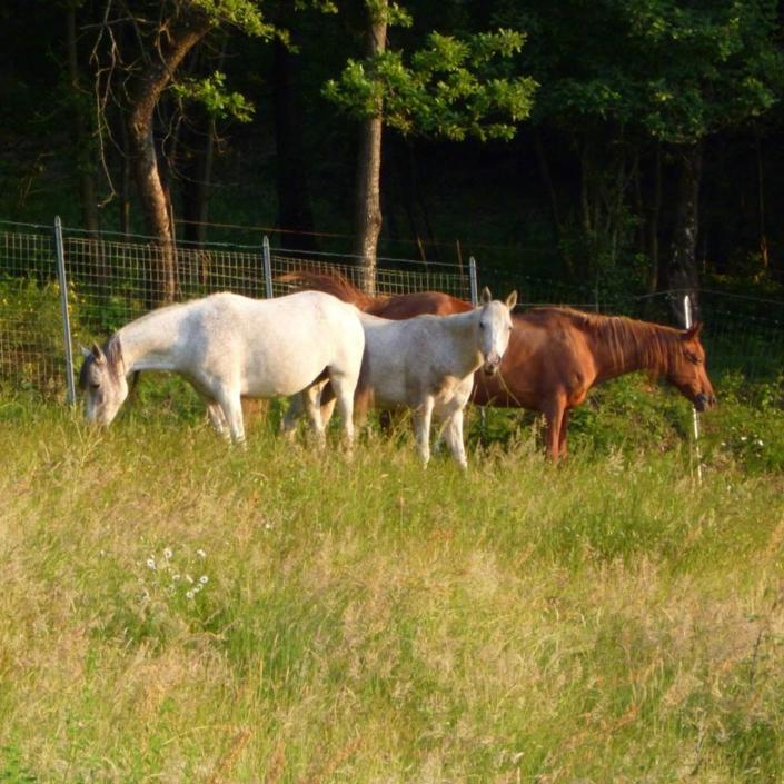 Cavalli - Agriturismo Case Nuove