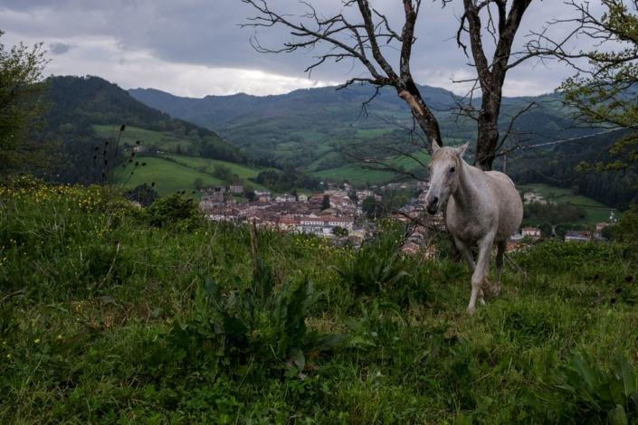 Cavallo - Agriturismo Case Nuove